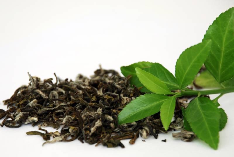 Как правильно выбирать чай в Калининграде?