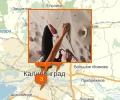 Где заниматься скалолазанием в Калининграде?