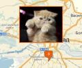 Где проводят выставки животных в Калининграде?