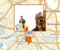 Где в Калининграде есть парикмахерские для собак и кошек?