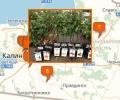 Где продают саженцы в Калининграде?